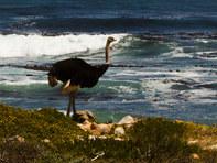 029-kapstadt-capetown-suedafrika-afrika-sonnenuntergang-meer-strand-urlaub-ferien-andy-hunger.jpg