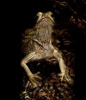 043-echsen-chameleons-geckos-krokodile-andy-hunger.jpg