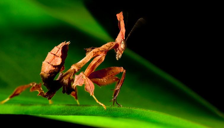 044-insektenfotos-spinnenfotos-gottesanbeterin-fliegen-kaefer-andyhunger.jpg
