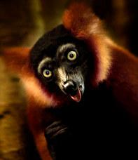038-säugetiere-affen-raubkatzen-gorillas-tierfotos-andyhunger.jpg