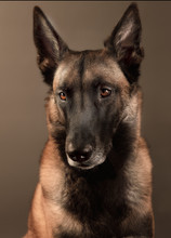 Hundefotos Hundeportraits 017.jpg
