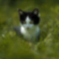 _ICL0129.jpg