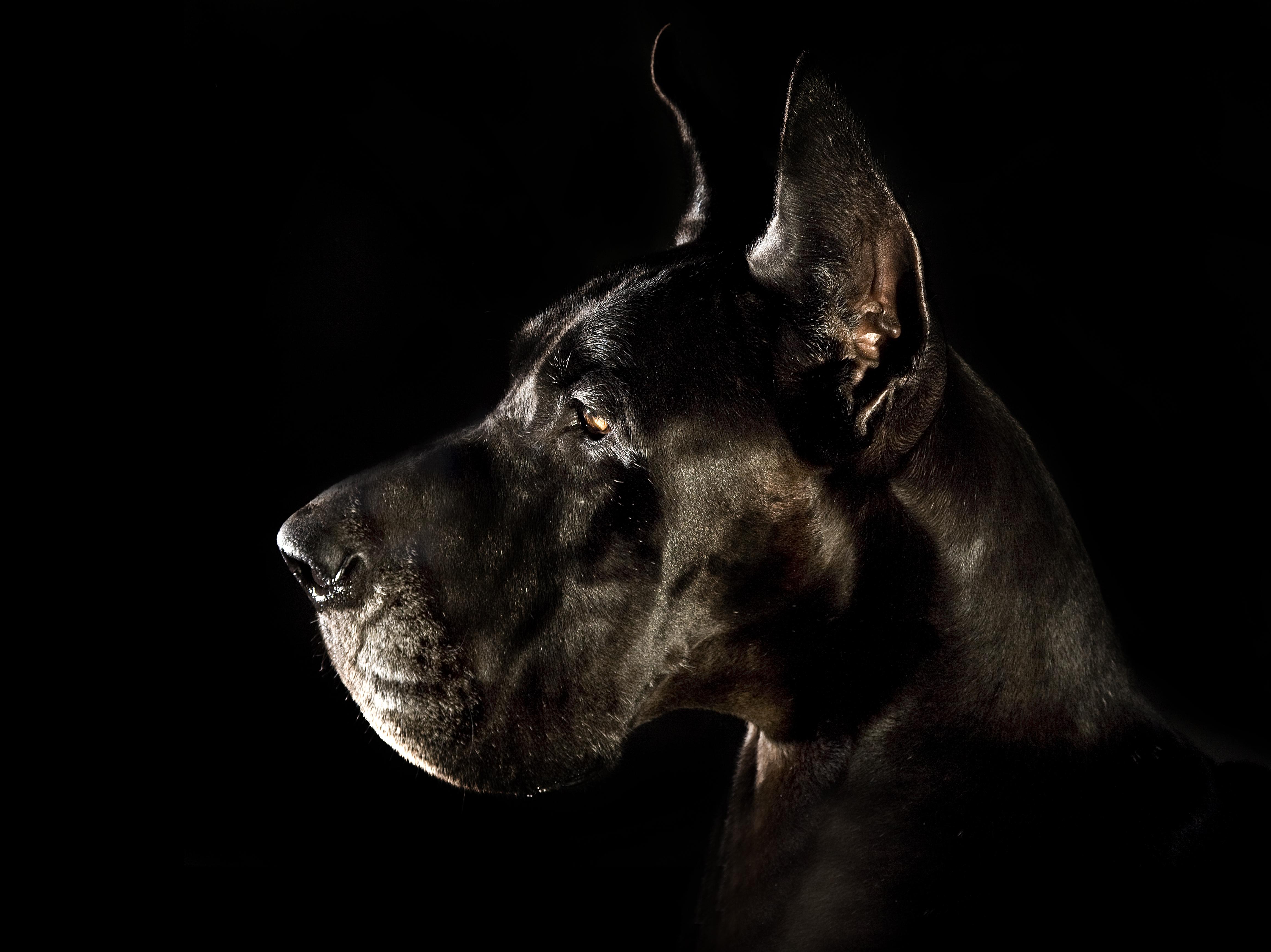 081-hundefotos-hundefotografie-hundebilder-hundeportraits-woelfe-caniden-hundefotograf-hundewelpen.h