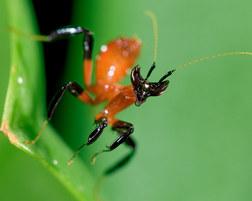 018-insektenfotos-spinnenfotos-gottesanbeterin-fliegen-kaefer-andyhunger.jpg