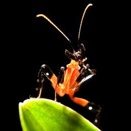 022-insektenfotos-spinnenfotos-gottesanbeterin-fliegen-kaefer-andyhunger.jpg