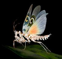 003-insektenfotos-spinnenfotos-gottesanbeterin-fliegen-kaefer-andyhunger.jpg