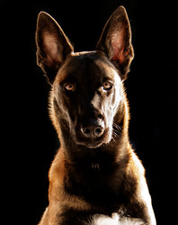 Hundefotos Hundeportraits 019.jpg