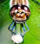 013-insektenfotos-spinnenfotos-gottesanbeterin-fliegen-kaefer-andyhunger.jpg