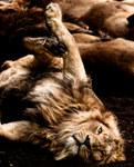 021-säugetiere-affen-raubkatzen-gorillas-tierfotos-andyhunger.jpg