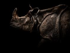 028-säugetiere-affen-raubkatzen-gorillas-tierfotos-andyhunger.jpg