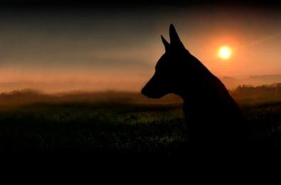 Hundefotos Hundeportraits 010.jpg