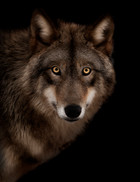 Hundefotos Hundeportraits 084.jpg