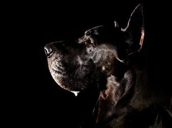 Hundefotos Hundeportraits 064.jpg