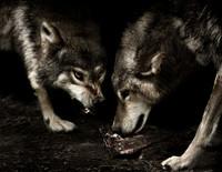 Hundefotos Hundeportraits 081.jpg