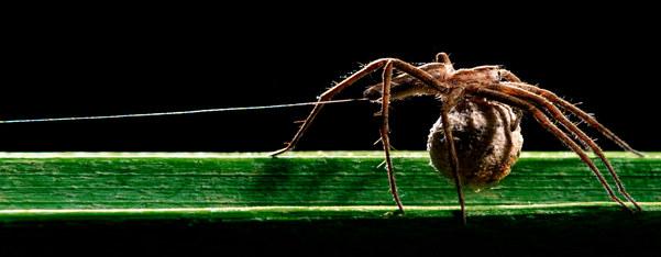 012-insektenfotos-spinnenfotos-gottesanbeterin-fliegen-kaefer-andyhunger.jpg