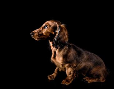 Hundefotos Hundeportraits 060.jpg