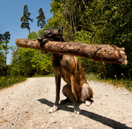 Hundefotos Hundeportraits 030.jpg