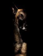 Hundefotos Hundeportraits 044.jpg