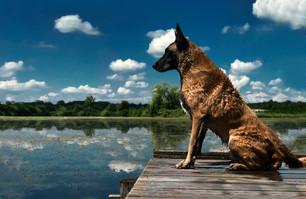 Hundefotos Hundeportraits 021.jpg