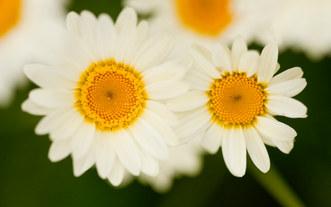 096-landschaftsfotos-naturfotos-pflanzenfotos-botanik-bluetenfotos-andyhunger.jpg