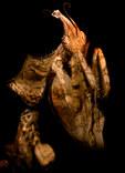 030-insektenfotos-spinnenfotos-gottesanbeterin-fliegen-kaefer-andyhunger.jpg