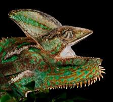 013-echsen-chameleons-geckos-krokodile-andy-hunger.jpg