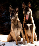 Hundefotos Hundeportraits 045.jpg