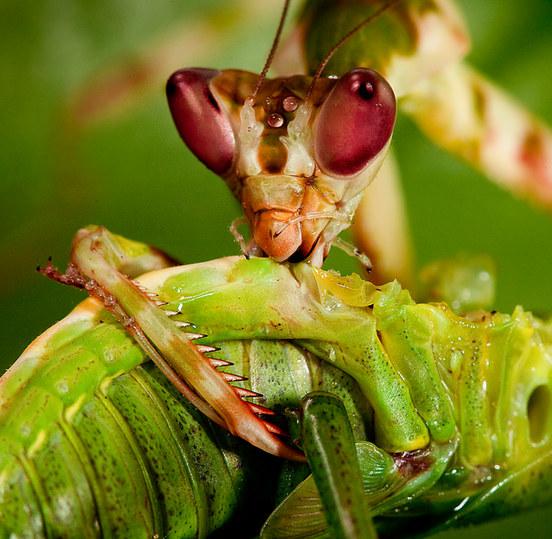 050-insektenfotos-spinnenfotos-gottesanbeterin-fliegen-kaefer-andyhunger.jpg