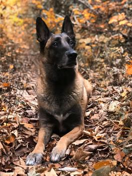 Hundefotos Hundeportraits 025.jpg