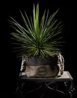 085-landschaftsfotos-naturfotos-pflanzenfotos-botanik-bluetenfotos-andyhunger.jpg