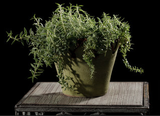 083-landschaftsfotos-naturfotos-pflanzenfotos-botanik-bluetenfotos-andyhunger.jpg