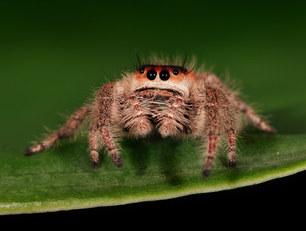 032-insektenfotos-spinnenfotos-gottesanbeterin-fliegen-kaefer-andyhunger.jpg