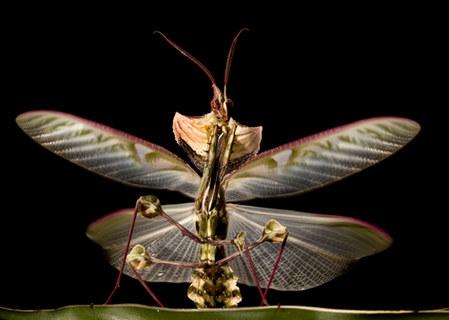 001-insektenfotos-spinnenfotos-gottesanbeterin-fliegen-kaefer-andyhunger.jpg