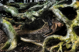 Hundefotos Hundeportraits 023.jpg
