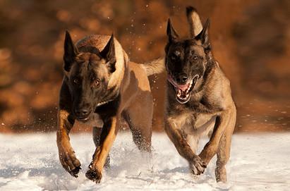 Hundefotos Hundeportraits 043.jpg