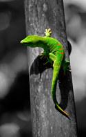 034-echsen-chameleons-geckos-krokodile-andy-hunger.jpg