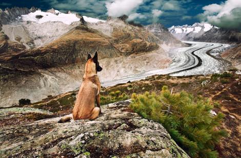 Hundefotos Hundeportraits 040.jpg