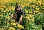 Hundefotos Hundeportraits 024.jpg