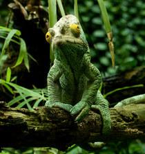 003-echsen-chameleons-geckos-krokodile-andy-hunger.jpg