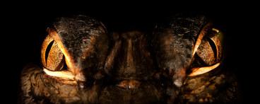 007-echsen-chameleons-geckos-krokodile-andy-hunger.jpg