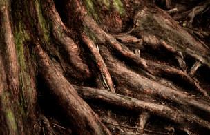 008-landschaftsfotos-naturfotos-pflanzenfotos-botanik-bluetenfotos-andyhunger.jpg