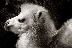 030-säugetiere-affen-raubkatzen-gorillas-tierfotos-andyhunger.jpg