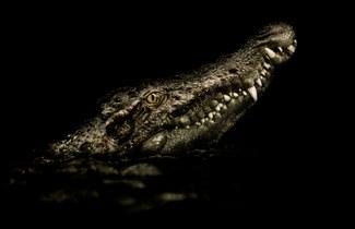 011-echsen-chameleons-geckos-krokodile-andy-hunger.jpg