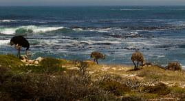 030-kapstadt-capetown-suedafrika-afrika-sonnenuntergang-meer-strand-urlaub-ferien-andy-hunger.jpg