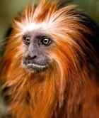 035-säugetiere-affen-raubkatzen-gorillas-tierfotos-andyhunger.jpg