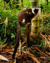 041-säugetiere-affen-raubkatzen-gorillas-tierfotos-andyhunger.jpg