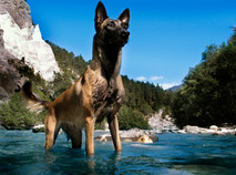 Hundefotos Hundeportraits 035.jpg