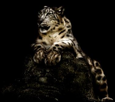 018-säugetiere-affen-raubkatzen-gorillas-tierfotos-andyhunger.jpg