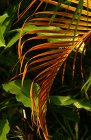 009-landschaftsfotos-naturfotos-pflanzenfotos-botanik-bluetenfotos-andyhunger.jpg