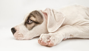 Hundefotos Hundeportraits 052.jpg